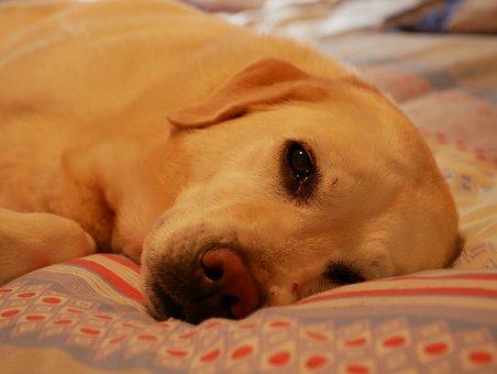 老 犬 食べ ない 余命 15歳の老ネコが食べ物を全く受け付けなくなり、どんどん衰弱していま...